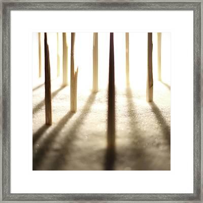 Snowy Forest Framed Print