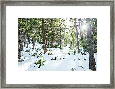 Snowy Forest Wilderness Playground Framed Print by James BO Insogna