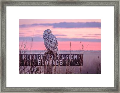 Framed Print featuring the photograph Snowy In The Meadow by Kelly Marquardt
