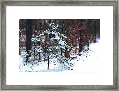 Snowy Little Fir Framed Print