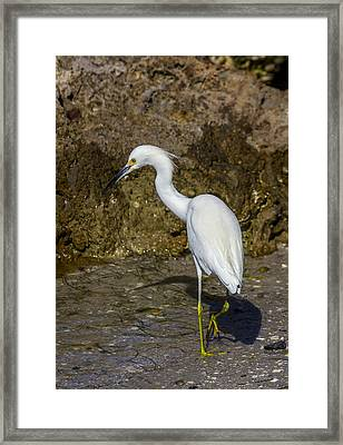 Snowy Framed Print by Marvin Spates