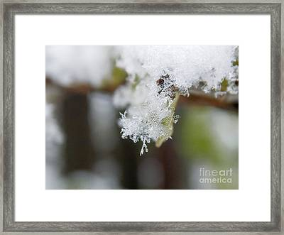 Snowy Morning Framed Print by Viktoriya Manukyan