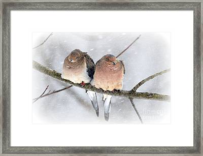 Snowy Mourning Dove Pair Framed Print