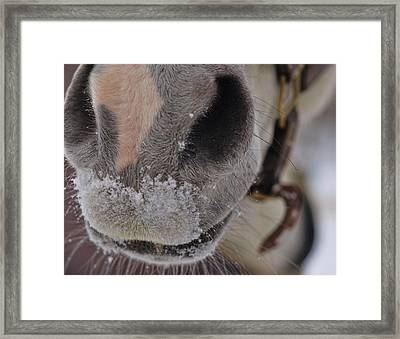 Snowy Muzzle  Framed Print by JAMART Photography
