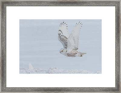 Framed Print featuring the photograph Snowy Owl #3/3 by Patti Deters