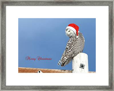 Framed Print featuring the photograph Snowy Owl Christmas Card by Everet Regal