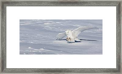 Framed Print featuring the photograph Snowy Owl by Dan Traun