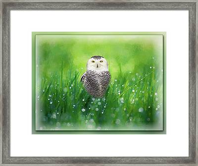 Snowy Owl In The Grass - Painting Framed Print by Ericamaxine Price