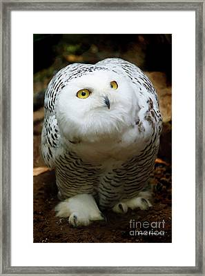 Snowy Owl Framed Print by Jerry L Barrett