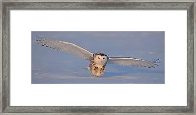 Snowy Owl Last Light Framed Print by Scott  Linstead