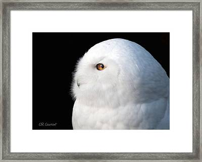 Snowy Owl Portrait Framed Print by CR  Courson