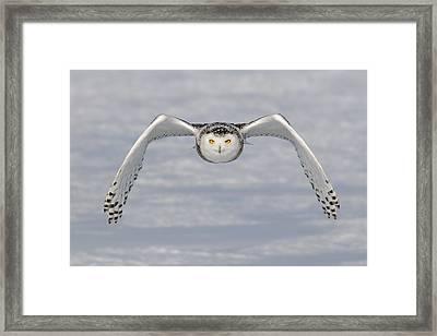Snowy Owl Framed Print by Scott  Linstead