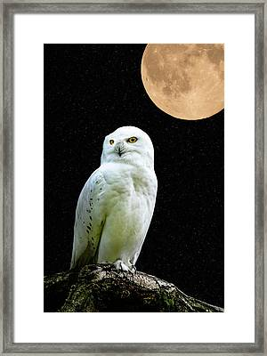 Snowy Owl Under The Moon Framed Print by Scott Carruthers