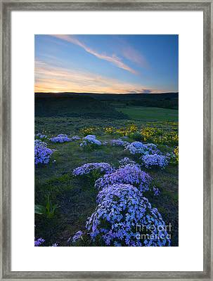 Snowy Phlox Sunset Framed Print