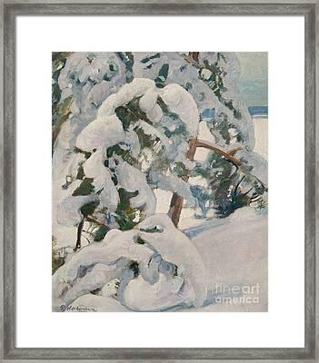 Snowy Pine Trees Framed Print