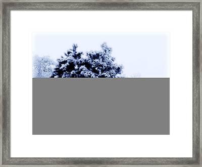 Snowy Pines Framed Print by Julie Hamilton