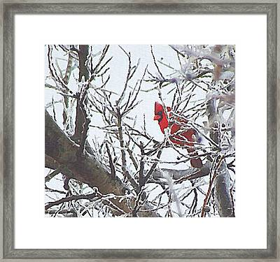 Snowy Red Bird A Cardinal In Winter Framed Print