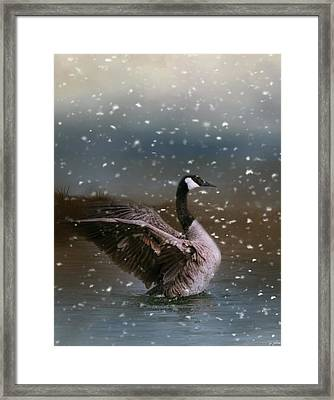 Snowy Swim Framed Print