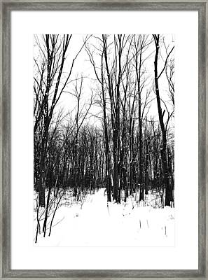 Snowy Trail Through The Woods Framed Print