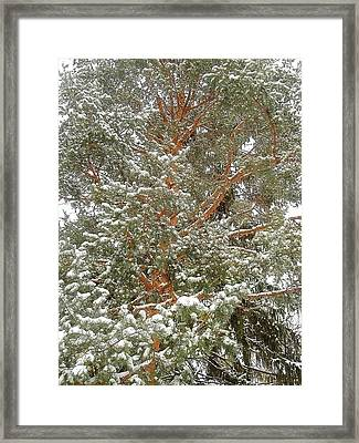 Snowy Tree Framed Print by Beth Akerman