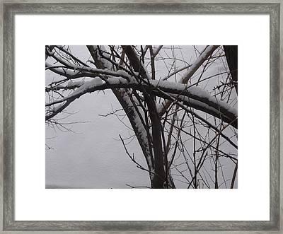 Snowy Tree II Framed Print by Anna Villarreal Garbis
