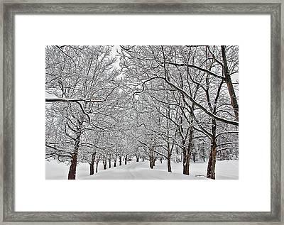 Snowy Treeline Framed Print