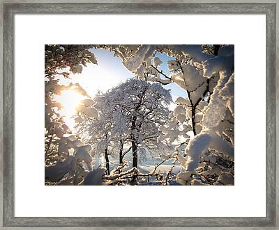 Snowy Trees Framed Print by RKAB Works