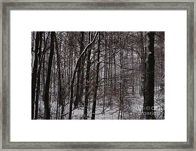 Snowy Woods Framed Print