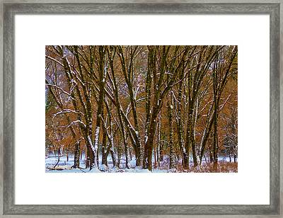 Snowy Yosemite Woods Framed Print