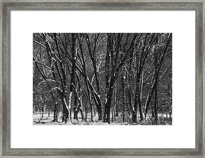 Snowy Yosemite Woods In Black And White Framed Print