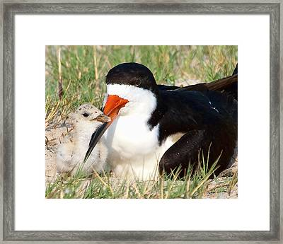Snuggle Framed Print by Sally Mitchell
