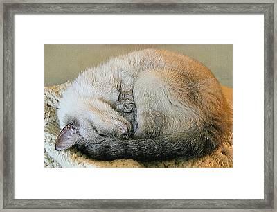 Snugglepuss Framed Print by Kristin Elmquist