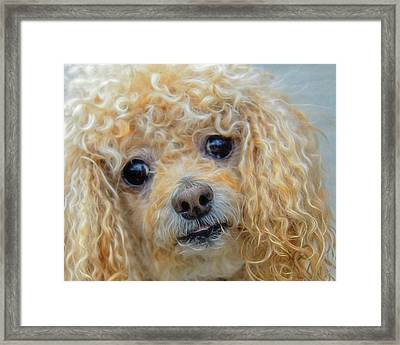 Framed Print featuring the photograph Snuggles by Steven Richardson