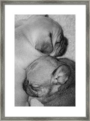 Snuggling Siblings Framed Print by Patricia M Shanahan