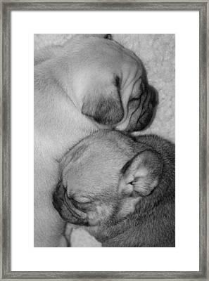 Snuggling Siblings Framed Print by Patricia M Shanahan