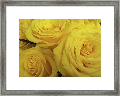 Snuggling Yellow Roses Framed Print by Sarah Vernon