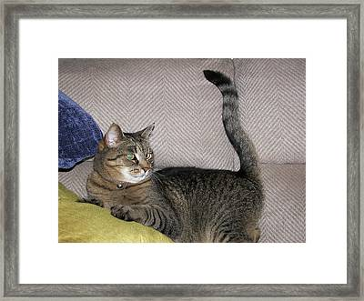 Framed Print featuring the photograph Snugs by Judy Via-Wolff
