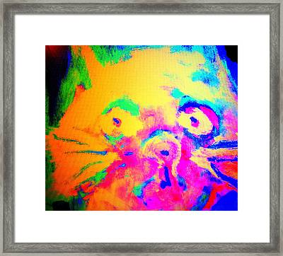 Come Look At My Amazing Cat, She Is So Colorful And Fat    Framed Print by Hilde Widerberg