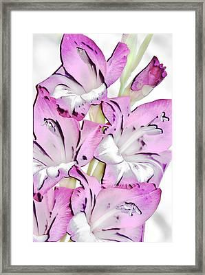 So Glad Vi Framed Print by Sean Holmquist