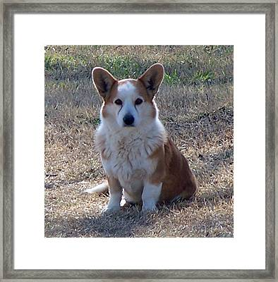 So Handsome Framed Print by Lilly King