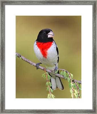 So Prim And Proper Framed Print by Gerry Sibell