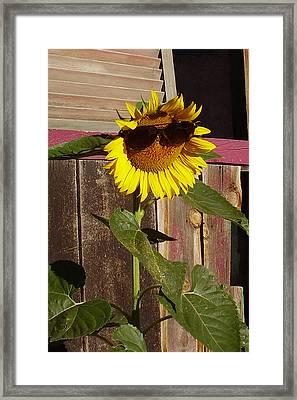 So So Bright Framed Print by Hank Lerma