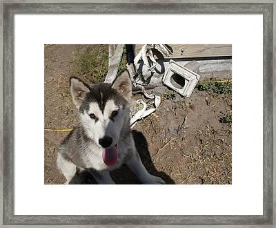 So You Want A Siberian Husky Framed Print