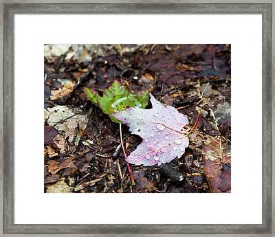 Soaken Leaves Framed Print