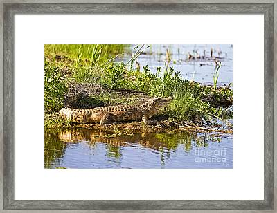 Soaking In The Sun Framed Print by Scott Pellegrin