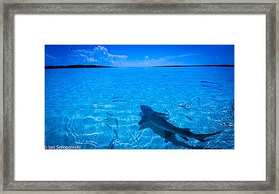 Soaking Up Some Rays Framed Print