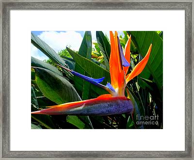 Soaking Up The Morning Sun Framed Print by Mary Deal