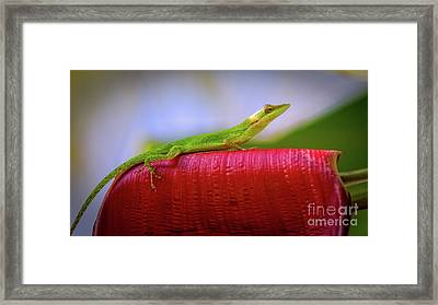 Soaking Up The Sun Framed Print by Doug Sturgess