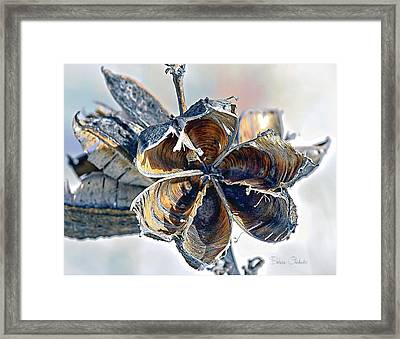 Soaptree Yucca Casing Framed Print by Barbara Chichester