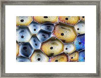 Framed Print featuring the photograph Soapy Colors by Jean Noren